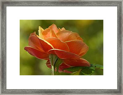 Framed Print featuring the photograph Catching A Few Rays by Cindy McDaniel