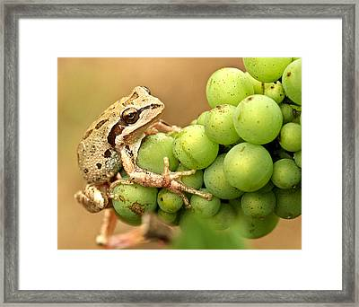 Catching A Ride On The Pinot Framed Print