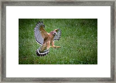Catching Dragonflies Framed Print