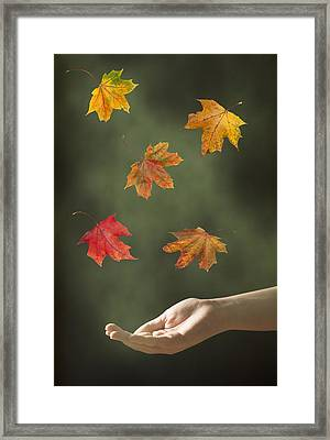 Catching Leaves Framed Print