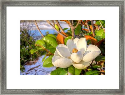 Catching Rays Framed Print by JC Findley