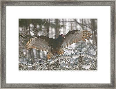 Framed Print featuring the photograph Catching Some Rays by Sandra Updyke