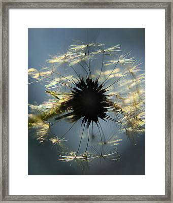 Catching Some Sun Framed Print by Camille Lopez