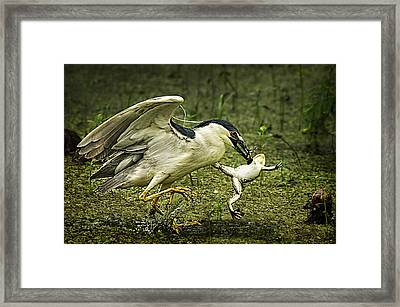 Catching Supper Framed Print