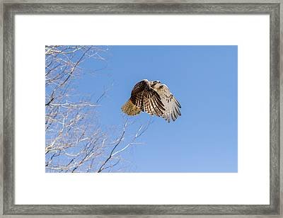 Catching The Sun Framed Print by Bill Wakeley