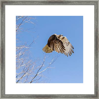 Catching The Sun Square Framed Print by Bill Wakeley