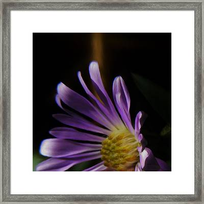 Catching The Sun's Rays Framed Print by Barbara St Jean