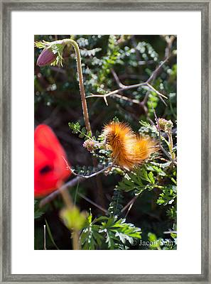 Caterpillar Framed Print by Jacob Sela