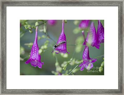 Caterpillar Playground  Framed Print