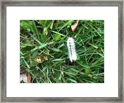 Caterpillar Framed Print by Tina Nies