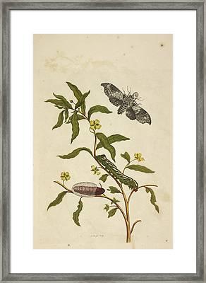 Caterpillars Feeding Framed Print by British Library