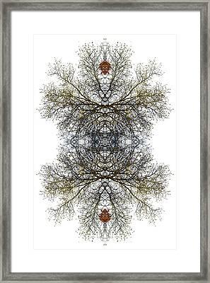 Cathedral Glass Framed Print by Debra and Dave Vanderlaan