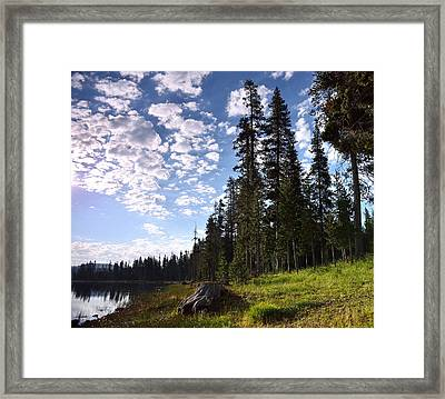 Cathedral Of Trees Framed Print by Rich Rauenzahn