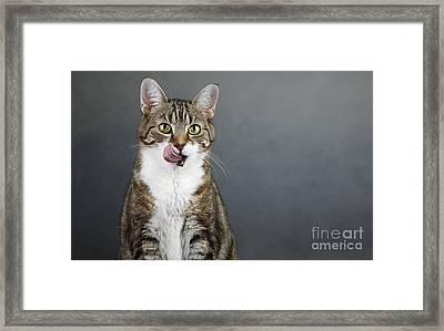 Catlick Framed Print by Nailia Schwarz