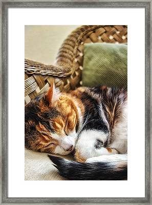 Catnap Framed Print by Anthony Citro