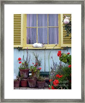 Catnap Framed Print by Barbie Corbett-Newmin