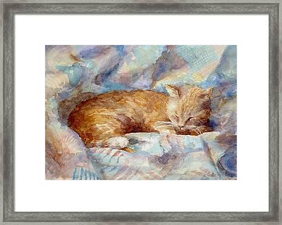 Catnap Framed Print by Leslie Fehling