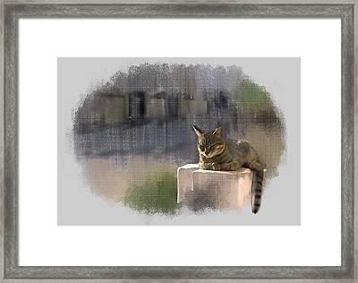 Catnap Framed Print by Usha Shantharam