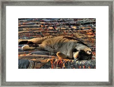Catnapping  Framed Print by Doug Farmer