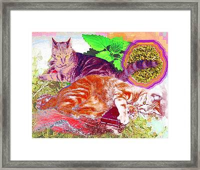 Catnip Boy Framed Print by Alice Ramirez