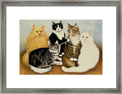 Cats Cradle Framed Print by Pat Scott