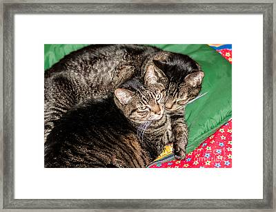 Cats Cuddling Framed Print by Sue Smith
