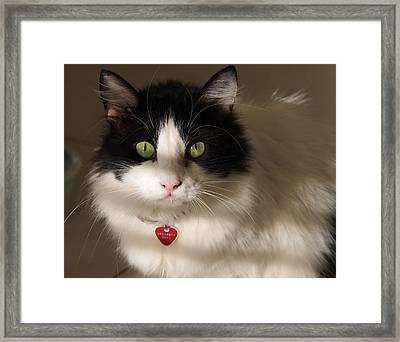 Framed Print featuring the photograph Cat's Eye by Karen Zuk Rosenblatt