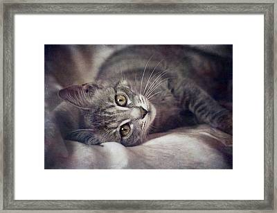 Cat's Eyes #01 Framed Print