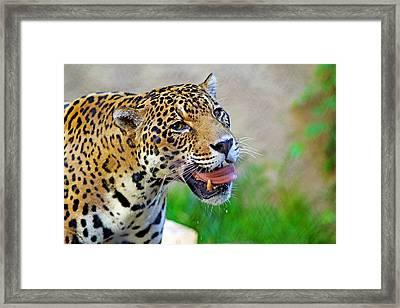 Cat's Got Your Tongue Framed Print by Evan Peller
