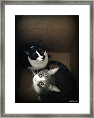 Cats In The Box Framed Print