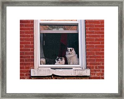 Cats On A Sill Framed Print by Randi Shenkman