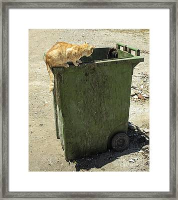 Cats On And In Garbage Container Framed Print by Patricia Hofmeester