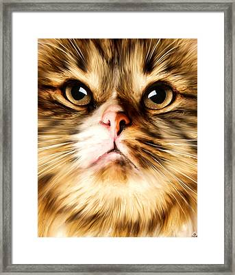 Cat's Perception Framed Print by Lourry Legarde