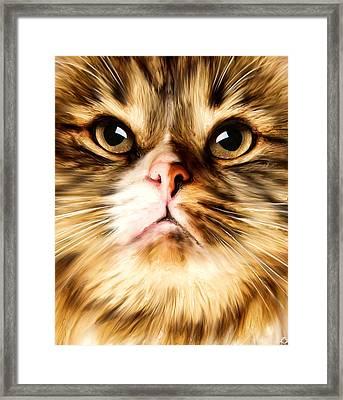 Cat's Perception Framed Print