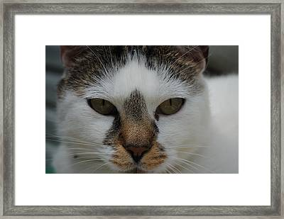 Cat's Stare Framed Print by Robert  Moss