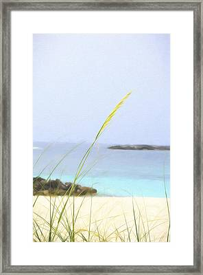 Cats View Framed Print