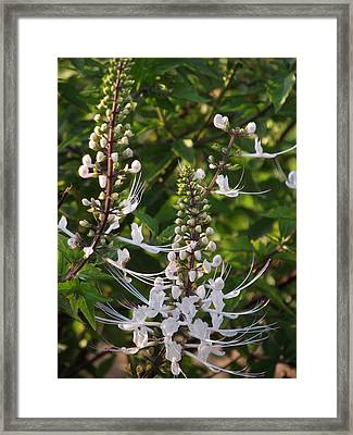 Cat's Whiskers Framed Print