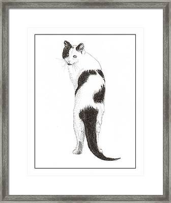 Cats You Speaking To Me Framed Print by Jack Pumphrey