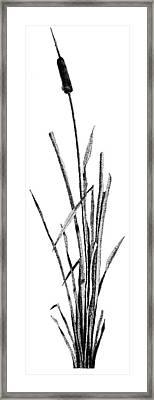 Cattail Framed Print by Rob Christensen