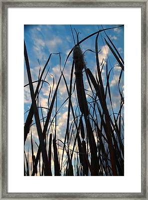 Framed Print featuring the photograph Cattail Sky by Alicia Knust