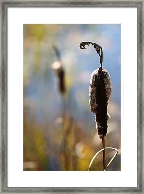 Cattails #2 Framed Print by Brady D Hebert