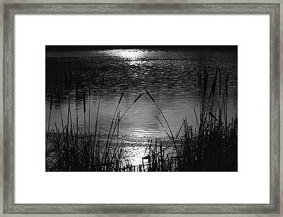 Cattails 3 Framed Print