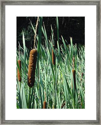 Framed Print featuring the photograph Cattails A Plenty by Michael Porchik