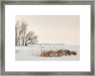 Cattails By The Shore In Winter Framed Print
