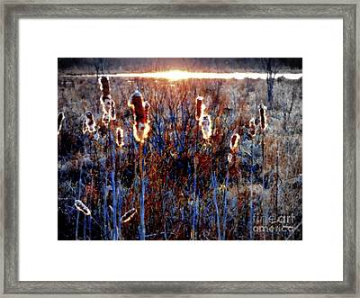 Cattails - Evening Glow On The Marsh Framed Print by Janine Riley