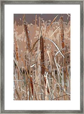 Cattails In The Fall Framed Print