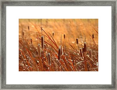 Framed Print featuring the photograph Cattails  by Lynn Hopwood