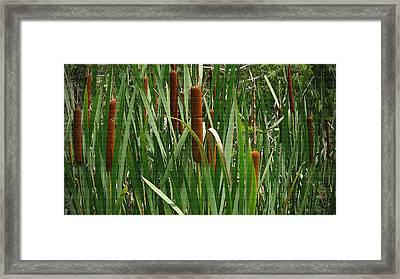 Cattails Whisper Framed Print by Sherry Gombert