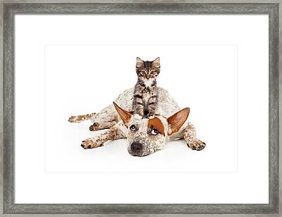 Catte Dog With Kitten On His Head Framed Print by Susan Schmitz