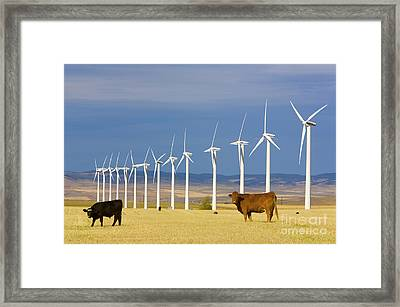 Cattle And Windmills In Alberta Canada Framed Print by Yva Momatiuk and John Eastcott